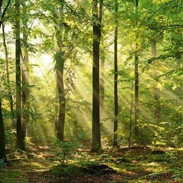 Image - Balade en forêt